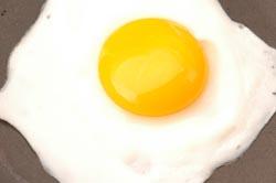 egg 521
