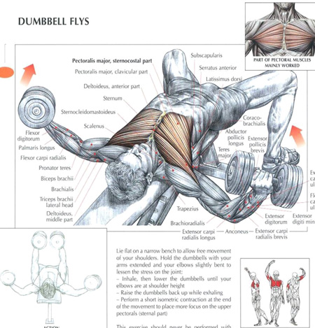 Strength Training Anatomy By Frederic Delavier Book Review | Burn ...