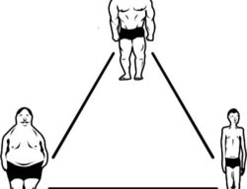 Body Type Revisited : A New Way To Think About The Endomorph, Ectomorph, And Mesomorph