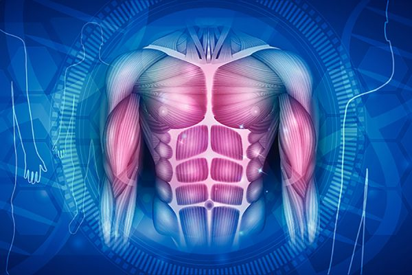 Muscle Building Science